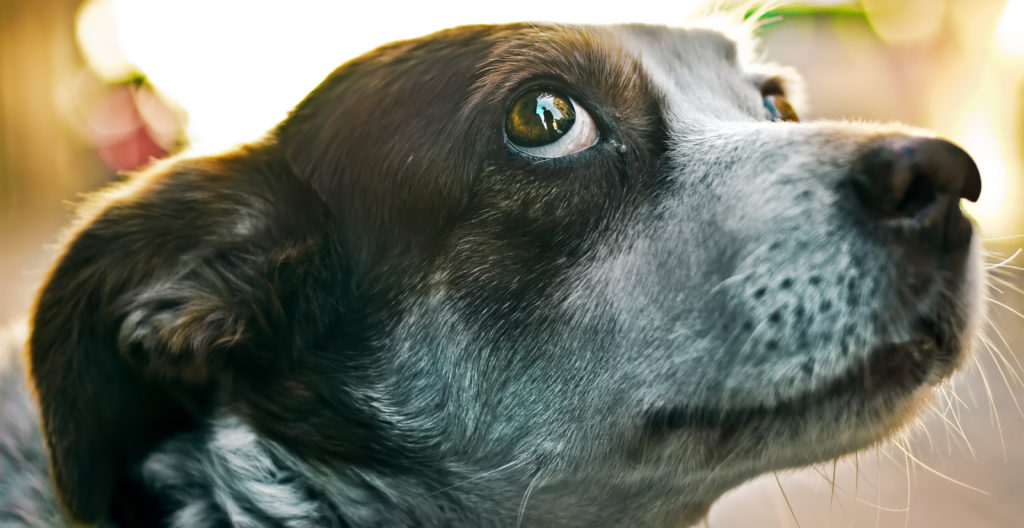 close-up of dog giving whale eye