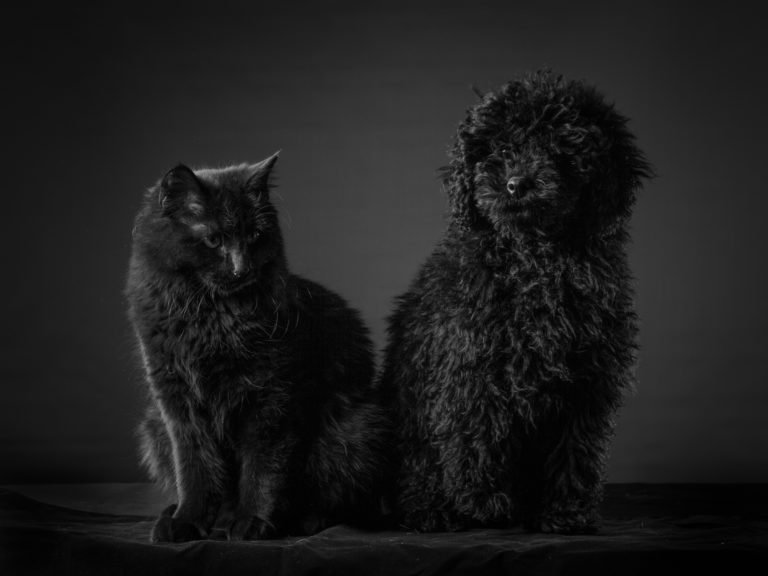 black cat and black poodle mix sitting together