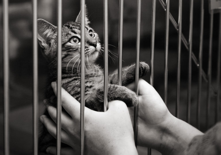 black and white photo of kitten being petted through kennel bars