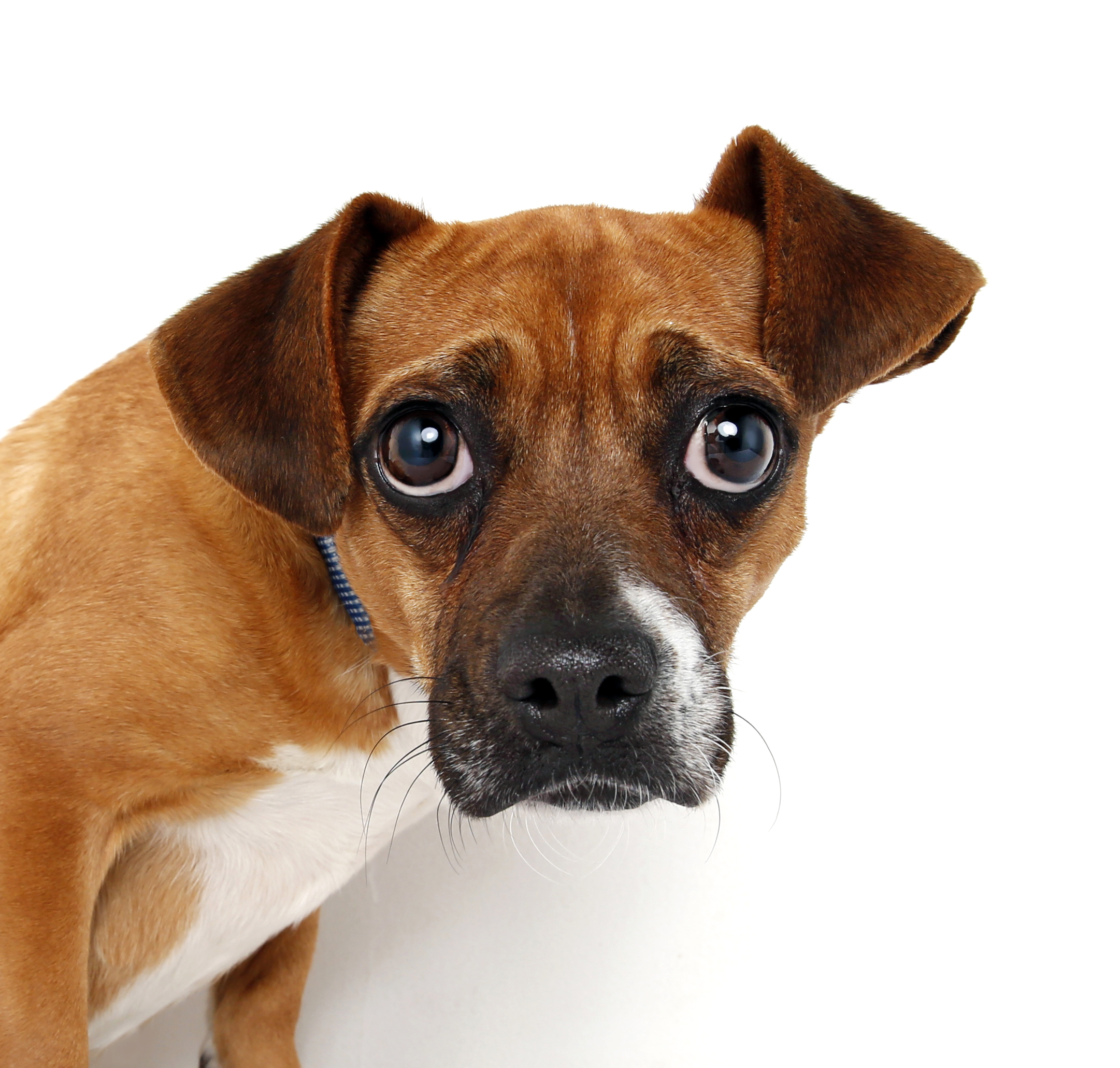 dog looks at camera like he did something wrong