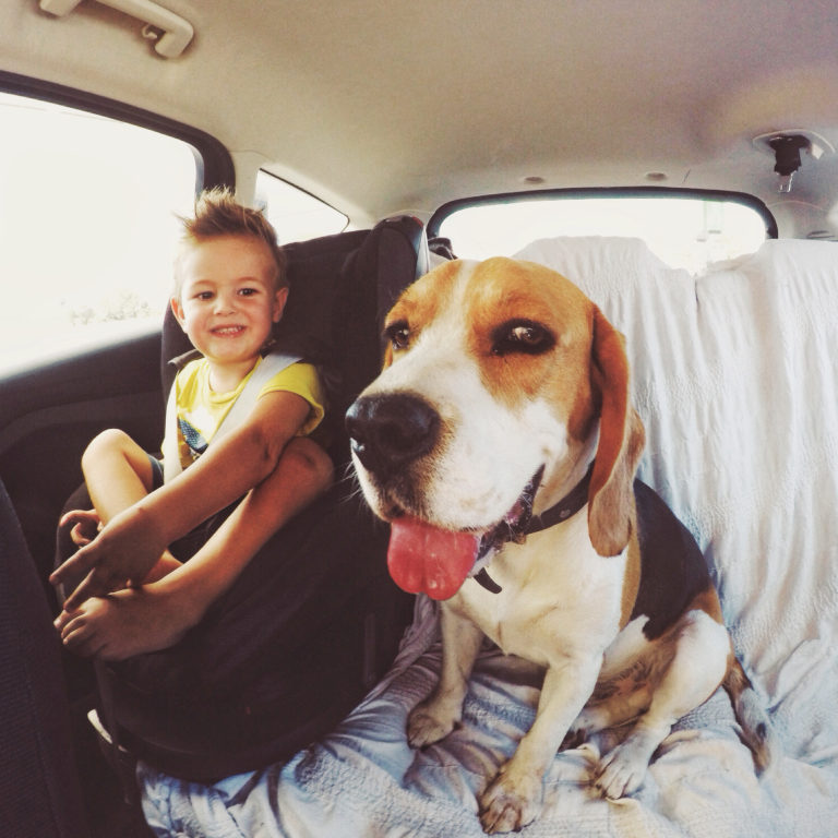 boy sits next to dog in backseat of car