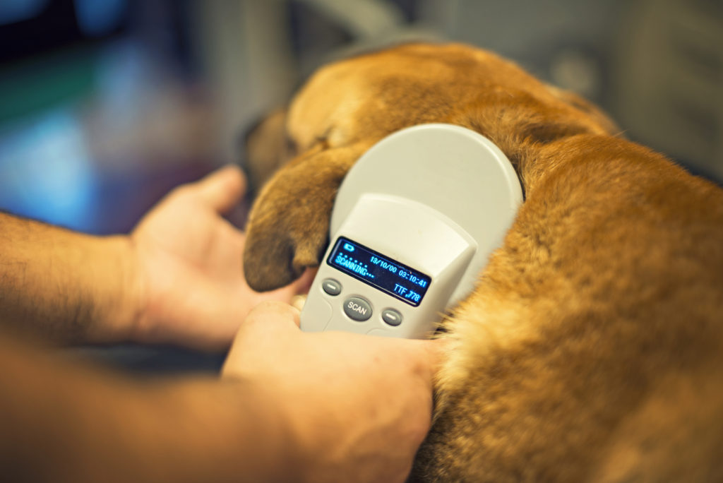 dog gets scanned for a microchip