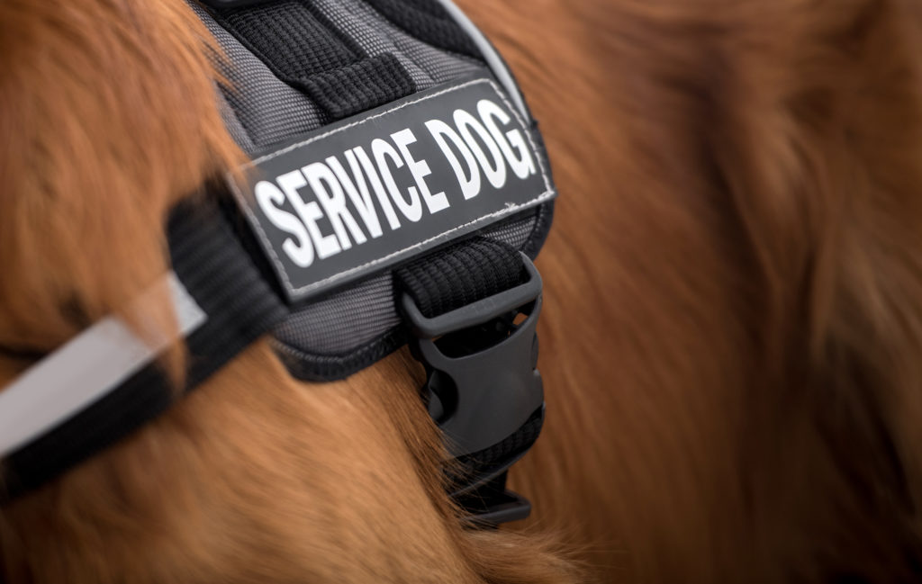close up of service dog harness