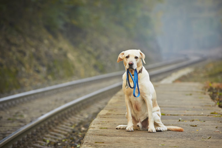 lonely dog waits with leash in mouth at railway platform