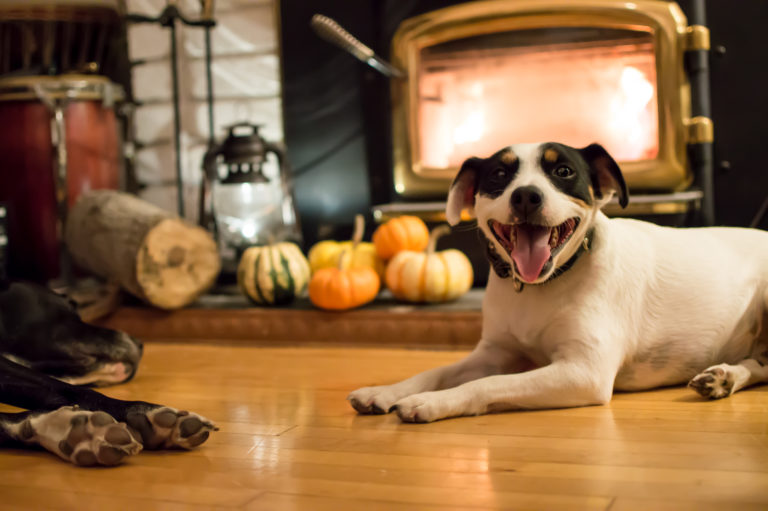 two dogs relax by fireplace with pumpkins