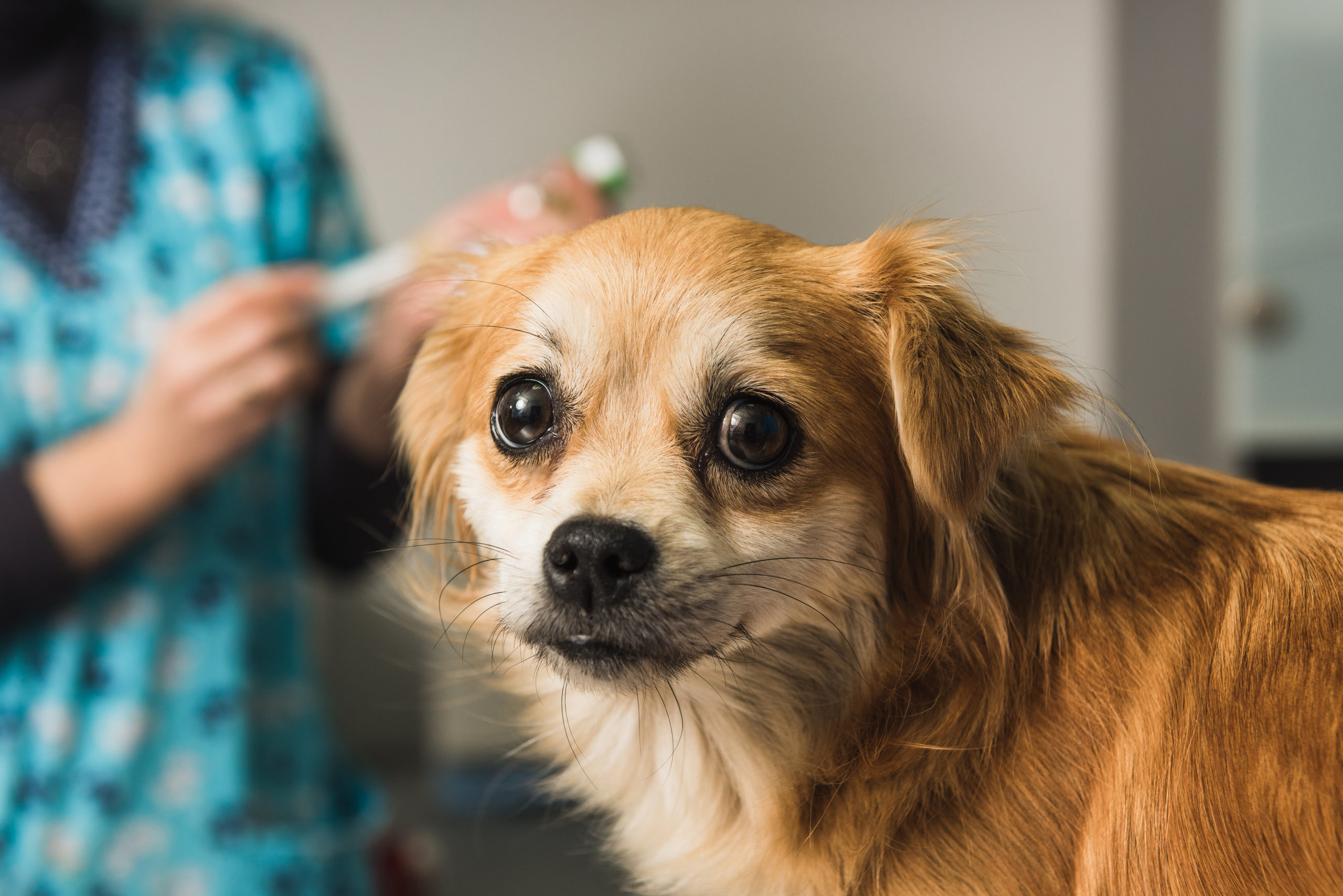 nervous dog at vet office