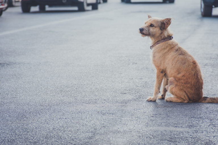 dog sitting in the street alone
