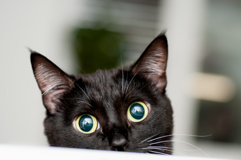 black cat peeking over ledge