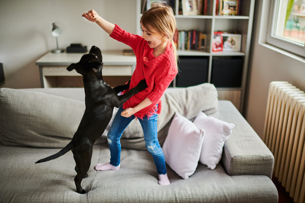 little girl plays with black puppy on the sofa