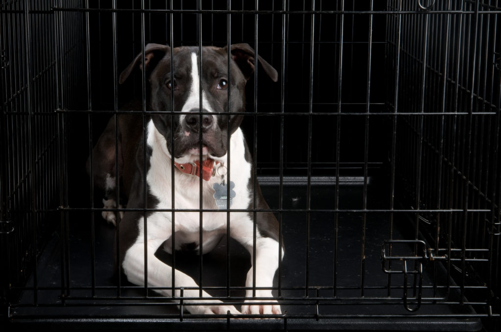 pit mix in black crate