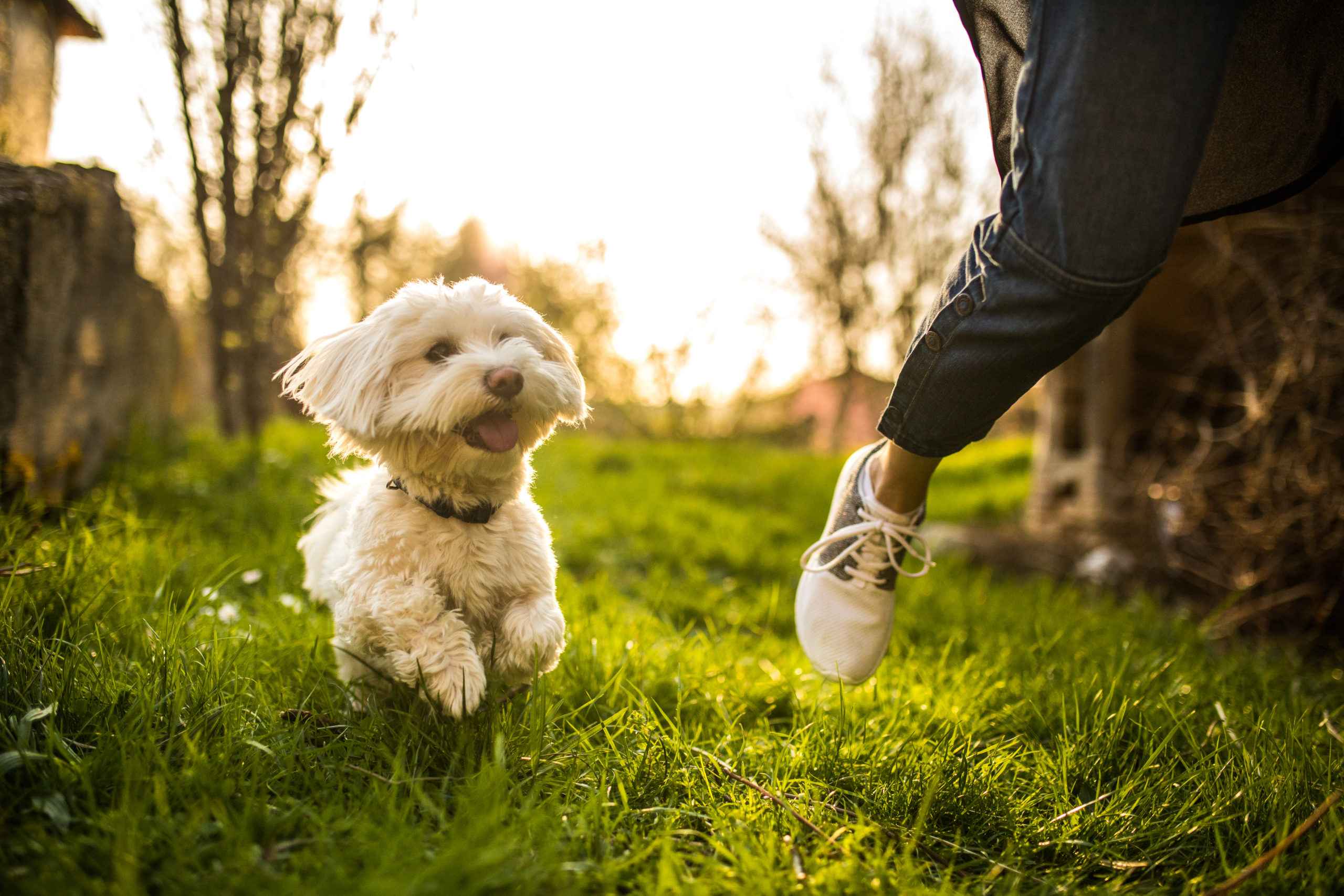 woman running with maltese outside