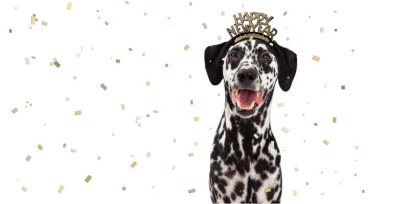 dalmation wears happy new year tiara