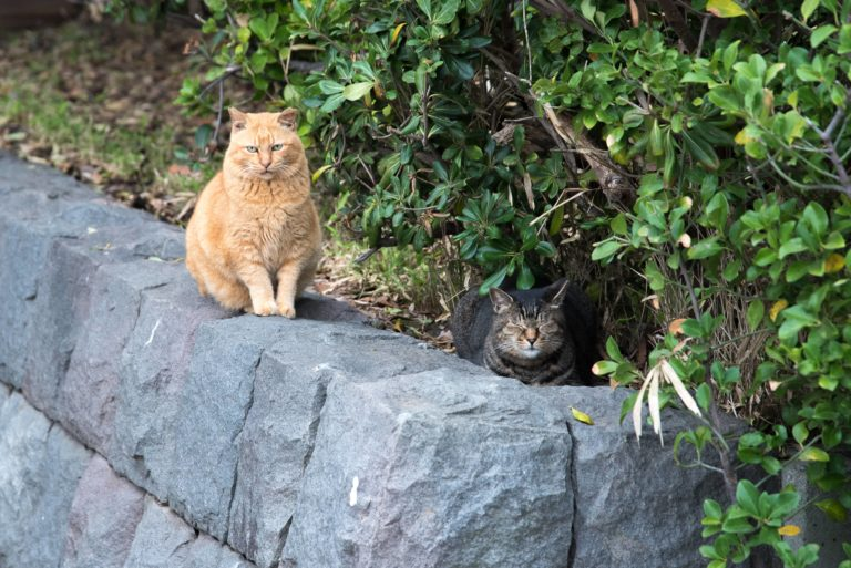 two cats on a stone wall