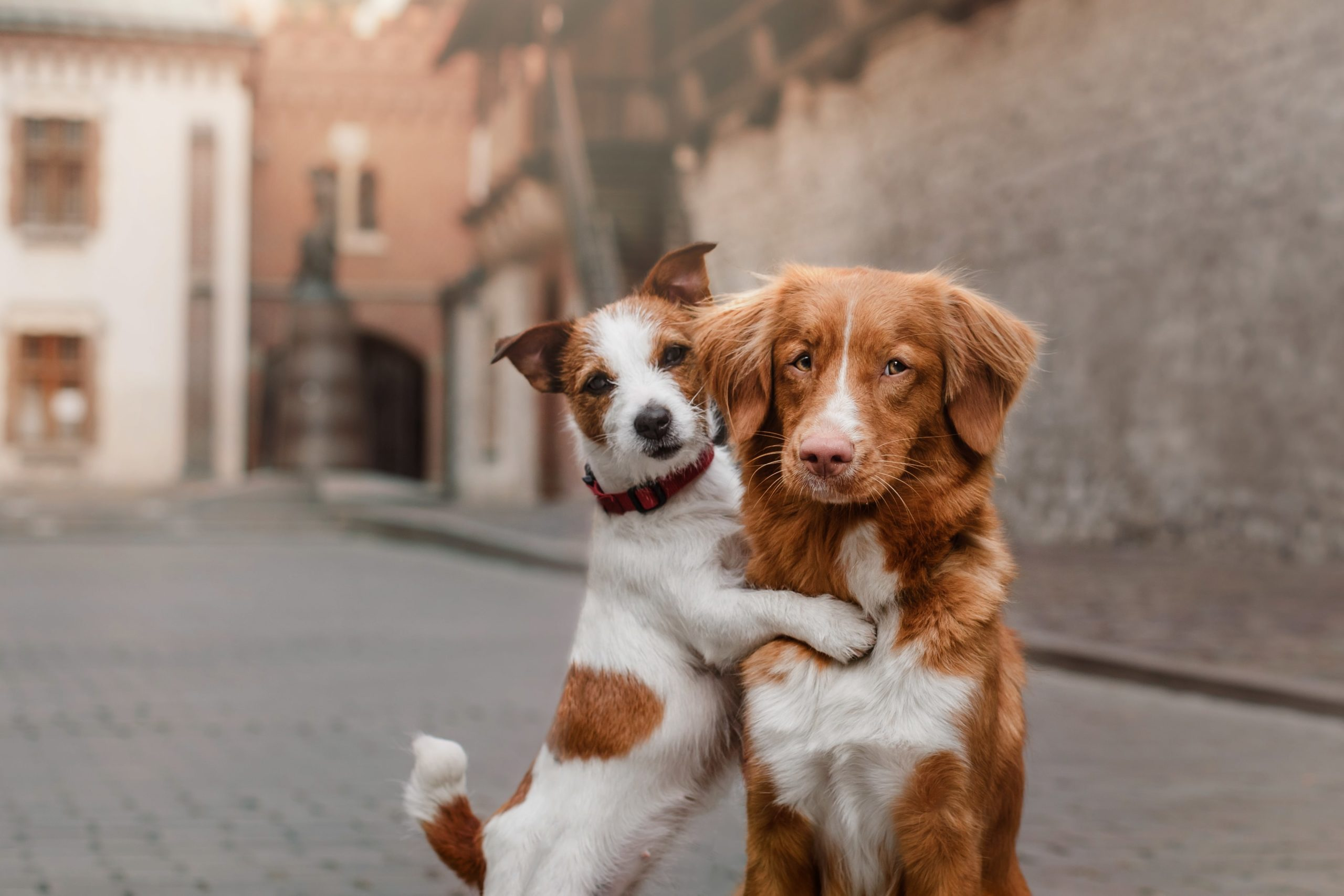 small dog hugs large dog in city street