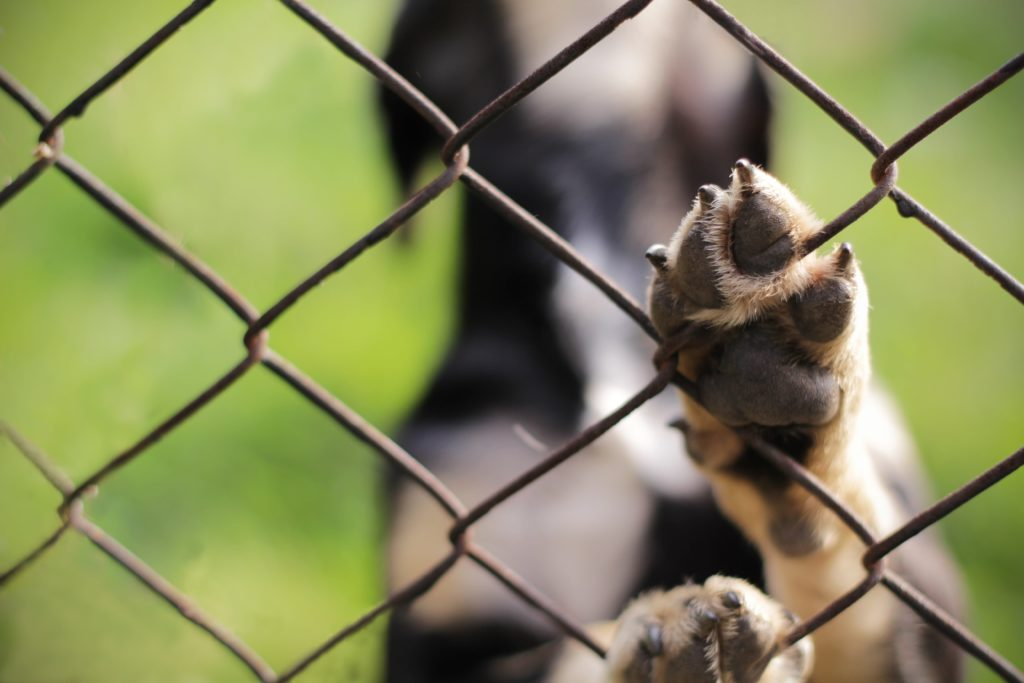 paw on fence