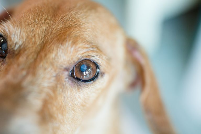 close up of dog eye