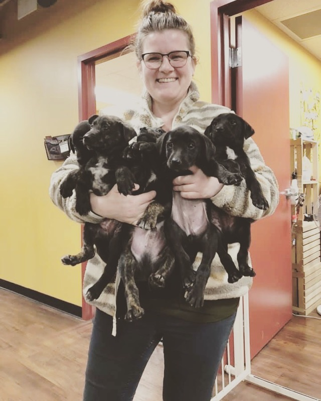 woman holds 5 black puppies