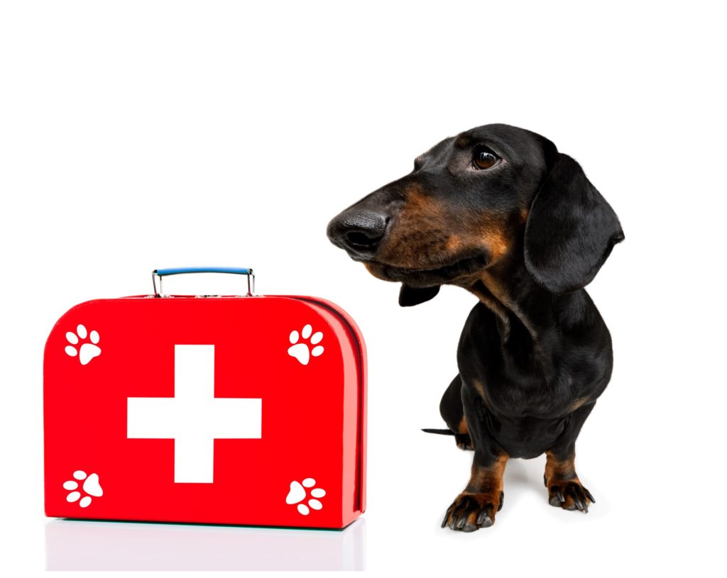 black and tan dachshund next to first aid kit, white background