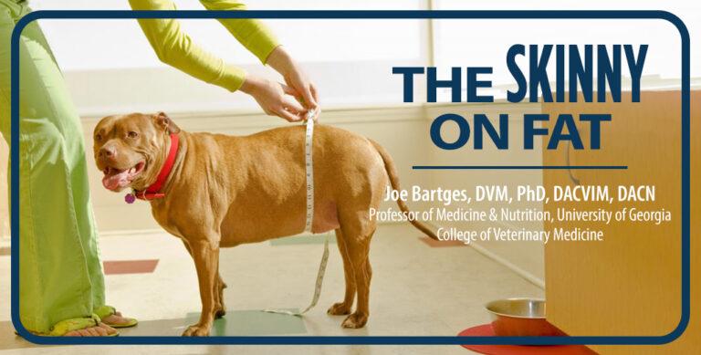 The Skinny on Fat, Joe Bartges, DVM, PhD, DACVIM, DACN header