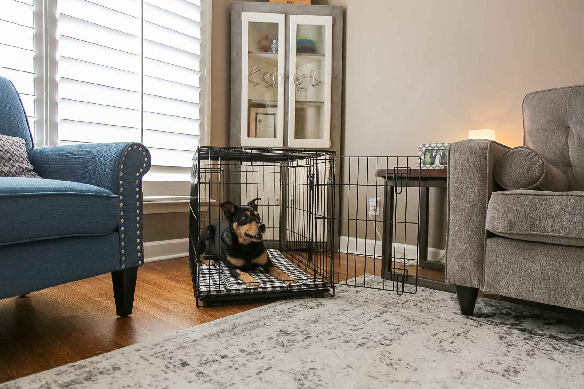 black and brown dog sitting happily in crate at home