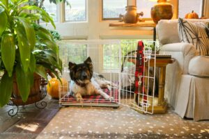 fluffy dog in white kennel with buffalo plaid accessories snoozepad in nice home